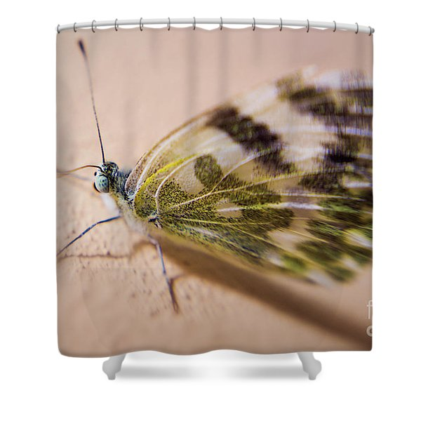 Selective Focus Butterfly  Shower Curtain