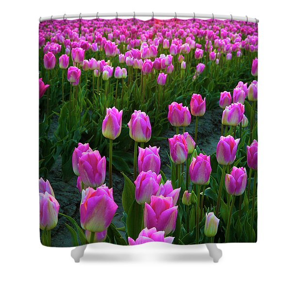 Skagit Valley Dawn Shower Curtain