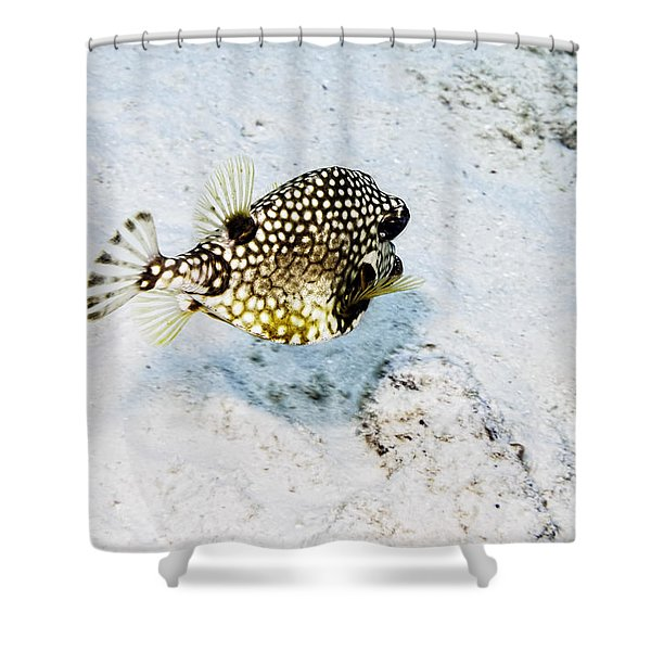 Shower Curtain featuring the photograph Smooth Trunkfish by Perla Copernik