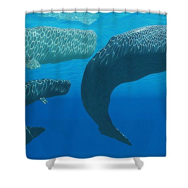 Sperm Whales Shower Curtain