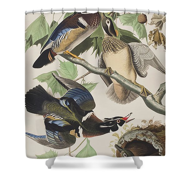 Summer Or Wood Duck Shower Curtain