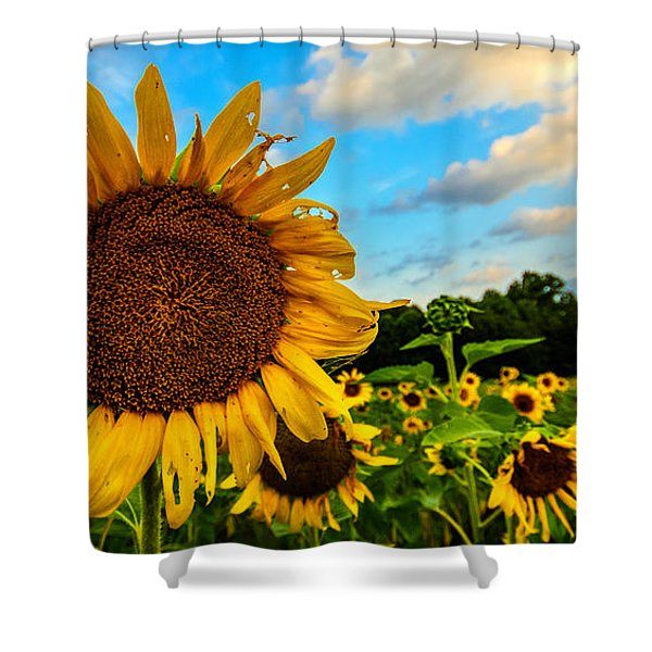 Summer Suns  Shower Curtain