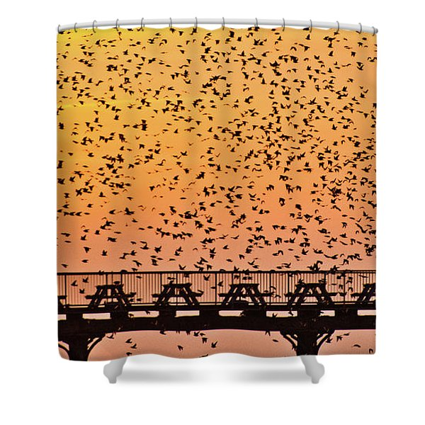 Sunset And Starlings In Aberystwyth Wales Shower Curtain