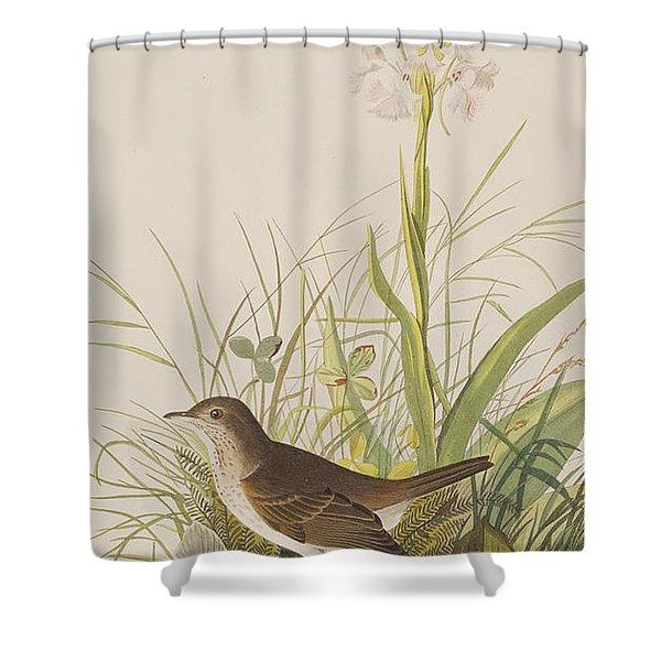 Tawny Thrush  Shower Curtain
