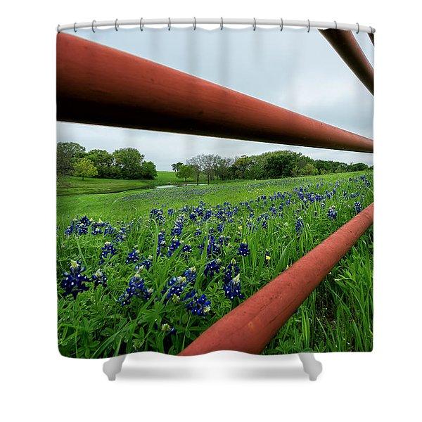 Texas Bluebonnets In Ennis Shower Curtain
