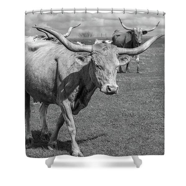 Shower Curtain featuring the photograph Texas Longhorns by Robert Bellomy