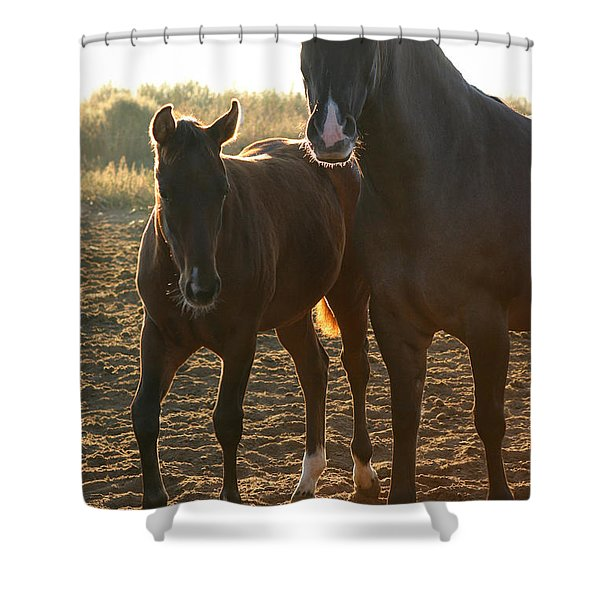 Texas Mare  Shower Curtain