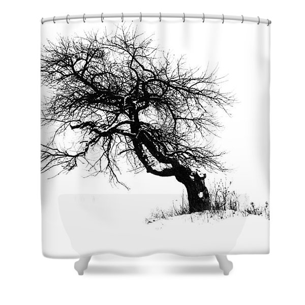 The Apple Tree Shower Curtain