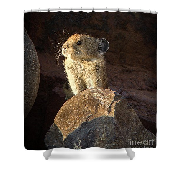 The Coast Is Clear Wildlife Photography By Kaylyn Franks Shower Curtain