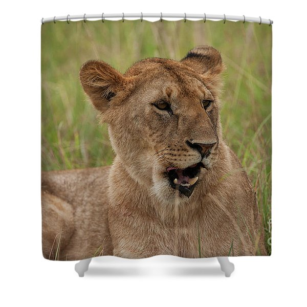 The Lioness Shower Curtain