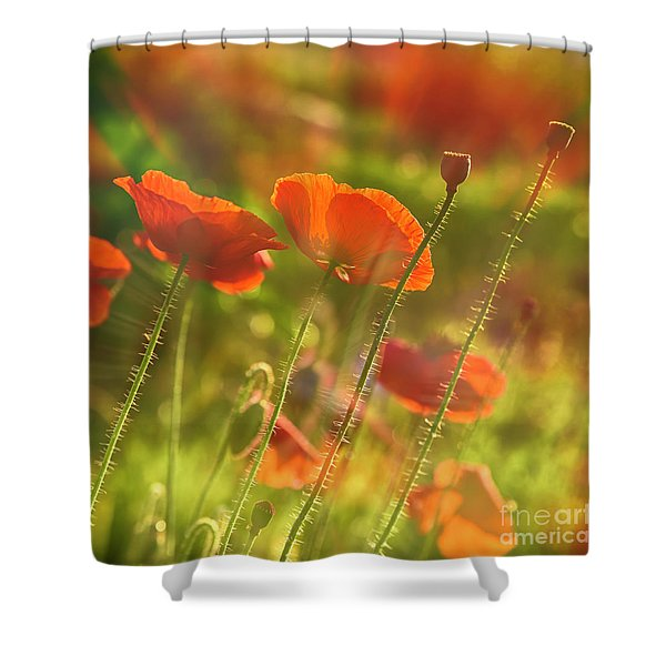 The Morning Light Shower Curtain