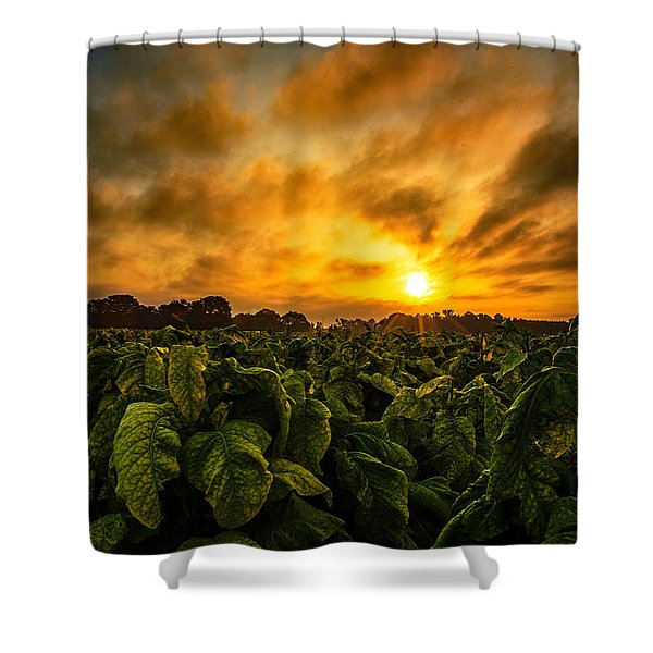 Tobacco Sunrise  Shower Curtain