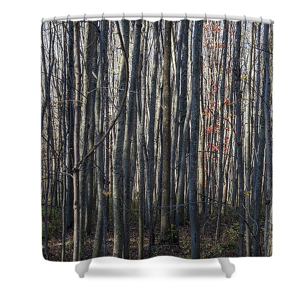 Treez Shower Curtain
