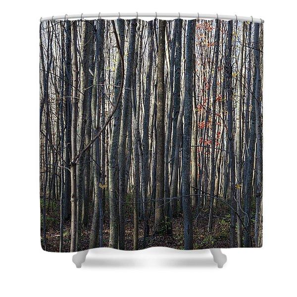 Treez Shower Curtain