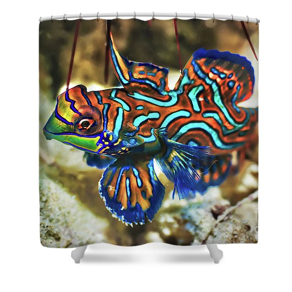 Tropical Fish Mandarinfish Shower Curtain