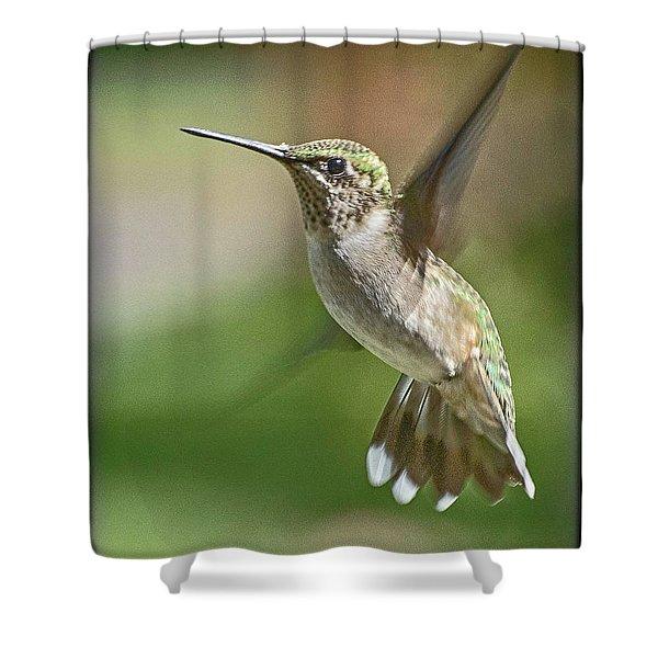 Untitled Hum_bird_five Shower Curtain