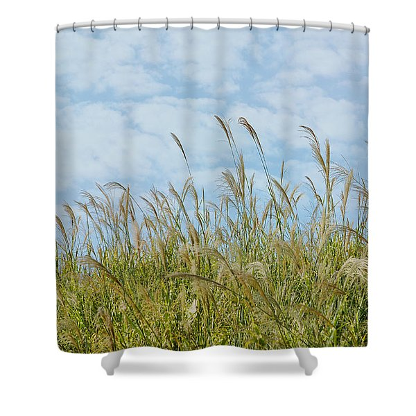 Whispers Of Summer Shower Curtain