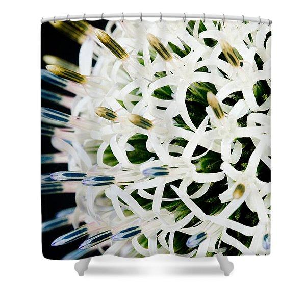 White Alium Onion Flower Shower Curtain