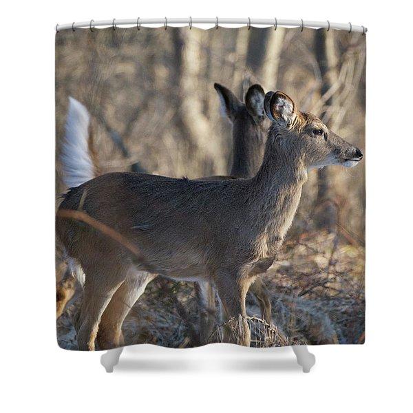 Wild Deer Shower Curtain