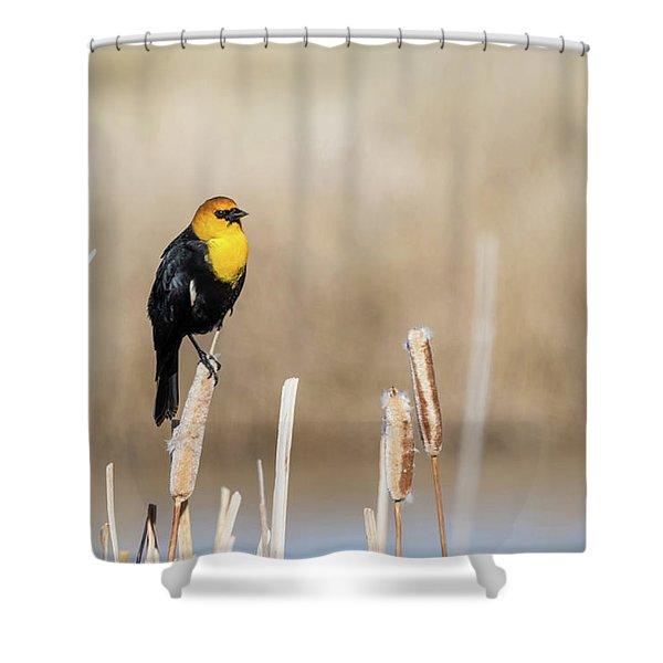 Yellow Headed Blackbird Shower Curtain