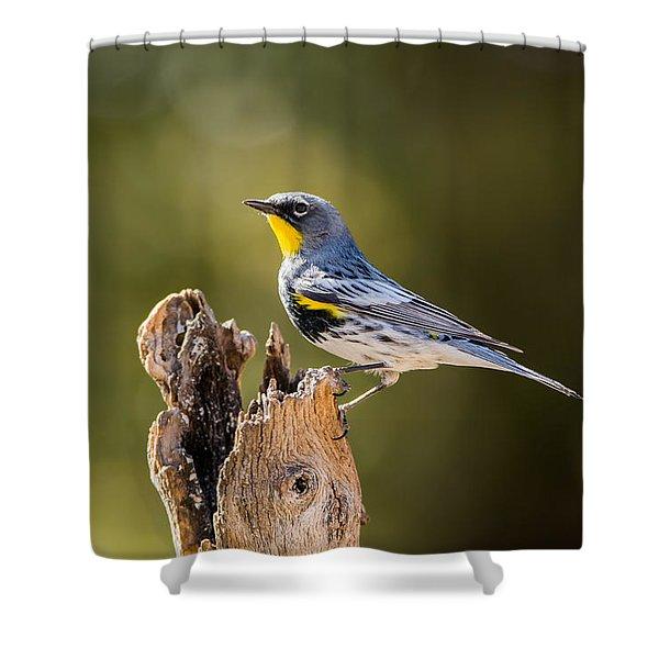 Yellow-rumped Warbler Shower Curtain