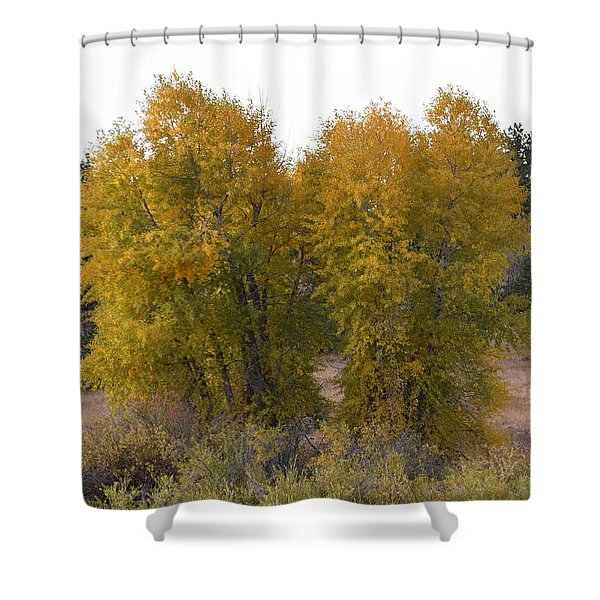 Aspen Trees In The Fall Co Shower Curtain
