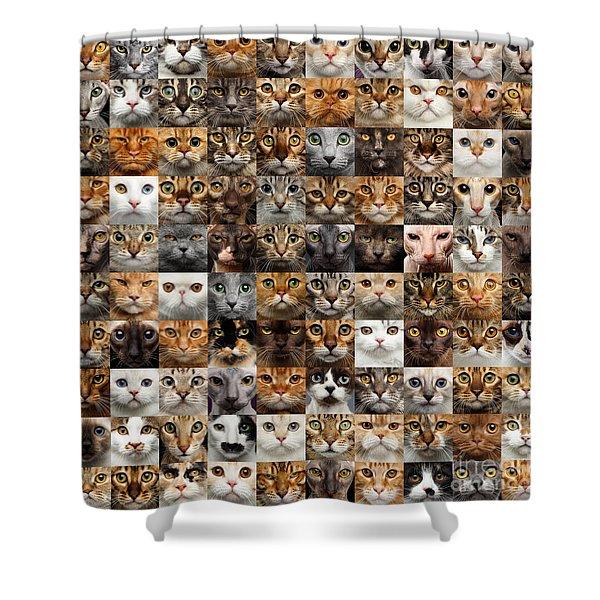 100 Cat Faces Shower Curtain