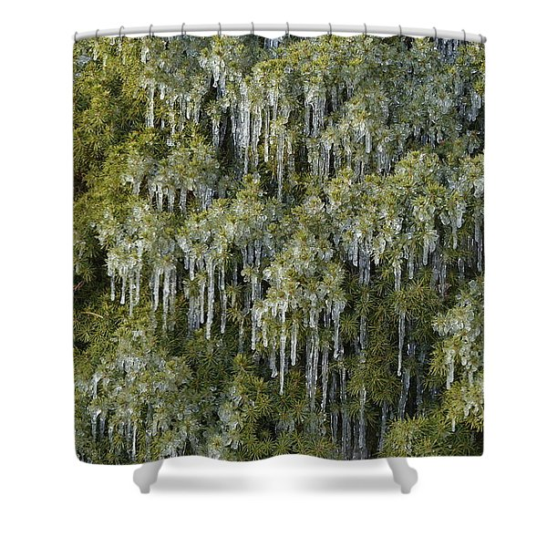 1000 Icicles And A Bush Shower Curtain