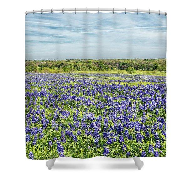 Texas Bluebonnets 11 Shower Curtain