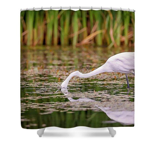 White, Great Egret Shower Curtain