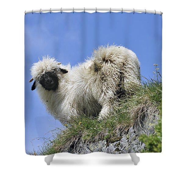 150827p302 Shower Curtain