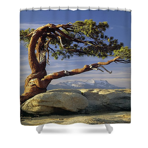1m6701 Historic Jeffrey Pine Sentinel Dome Yosemite Shower Curtain