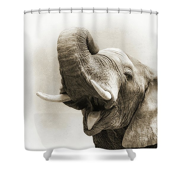 African Elephant Closeup Square Shower Curtain