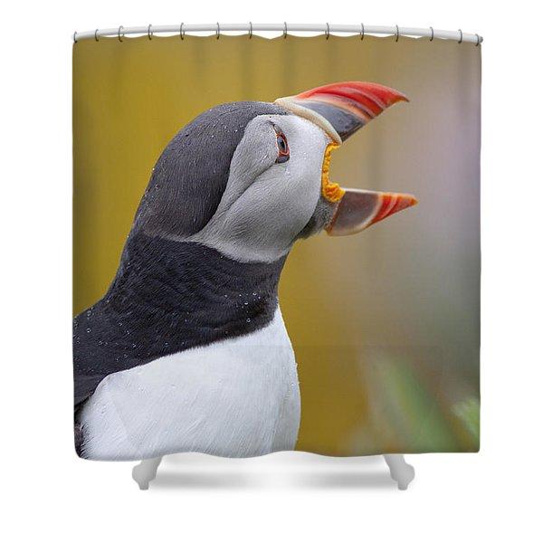Atlantic Puffin - Scotland Shower Curtain