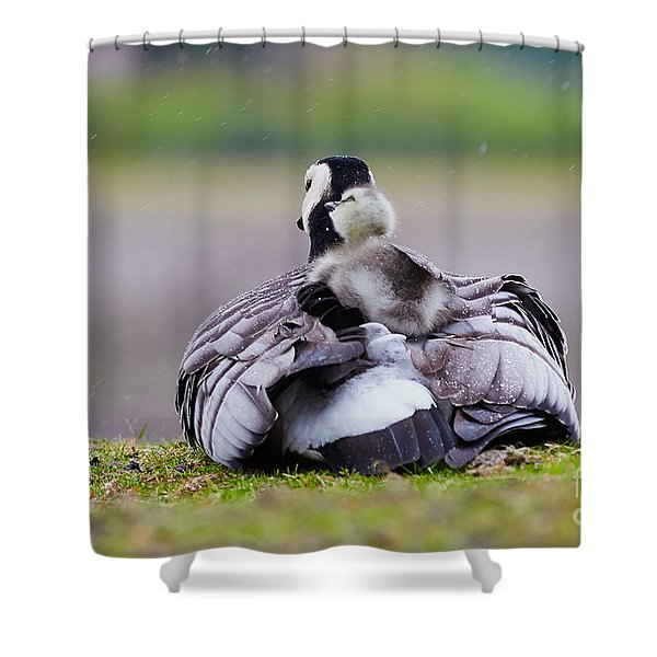 Barnacle Goose With Chick In The Rain Shower Curtain