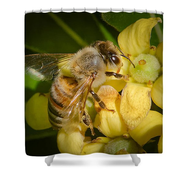 Bees Gathering From Pittosporum Flowers Shower Curtain