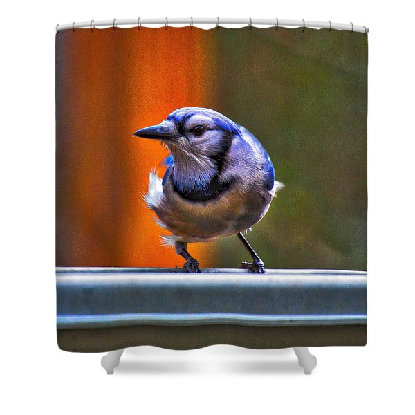 Shower Curtain featuring the photograph Bluejay by Robert L Jackson