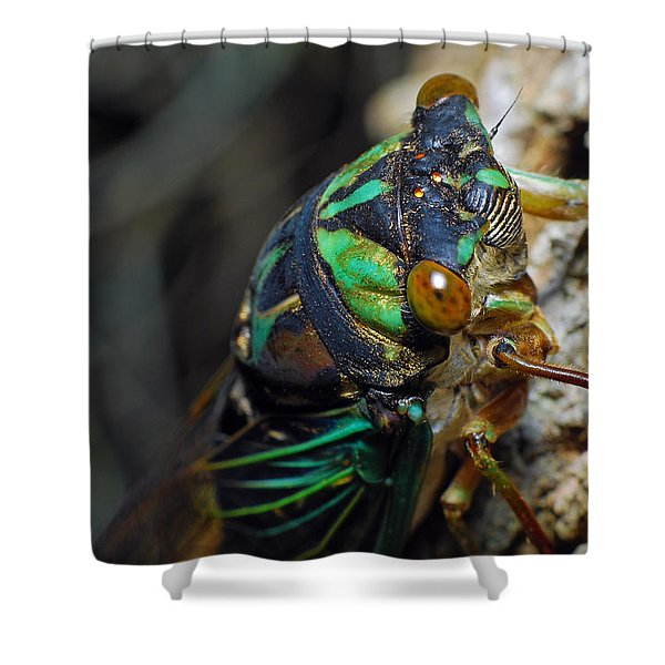 Cicada Shower Curtain