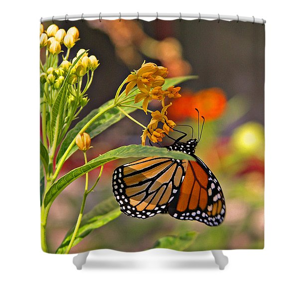 Clinging Butterfly Shower Curtain