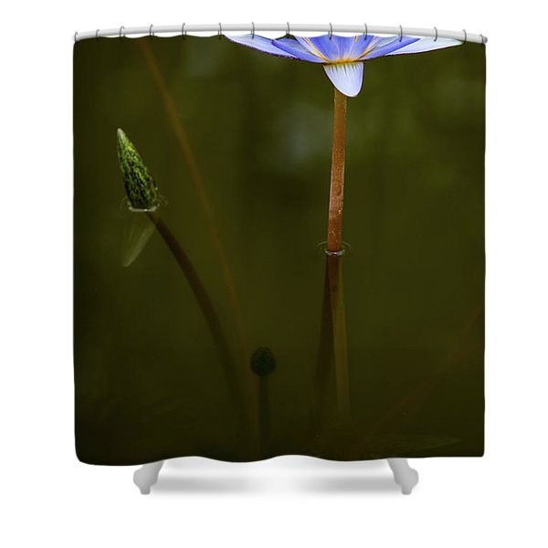 Deep Lily Reflection Shower Curtain