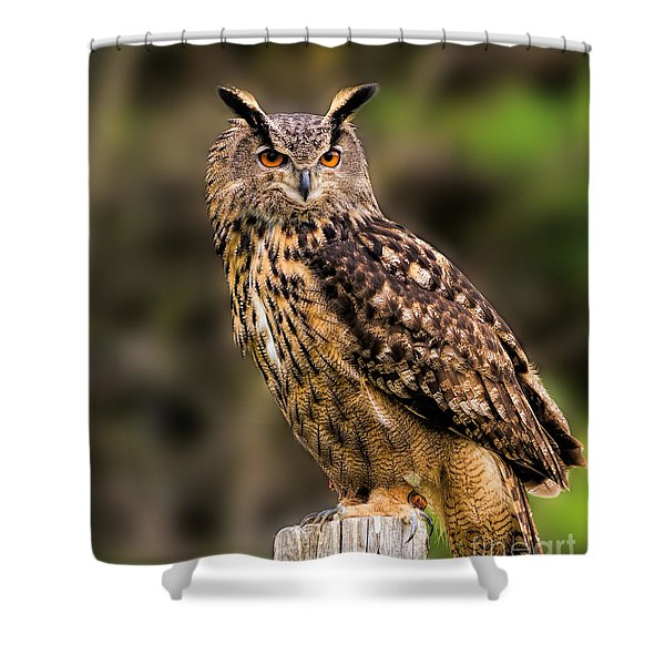 Eurasian Eagle Owl Perched On A Post Shower Curtain