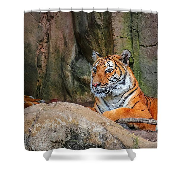 Fort Worth Zoo Tiger Shower Curtain
