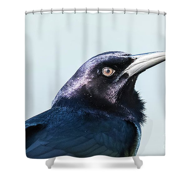 Grackle Shower Curtain