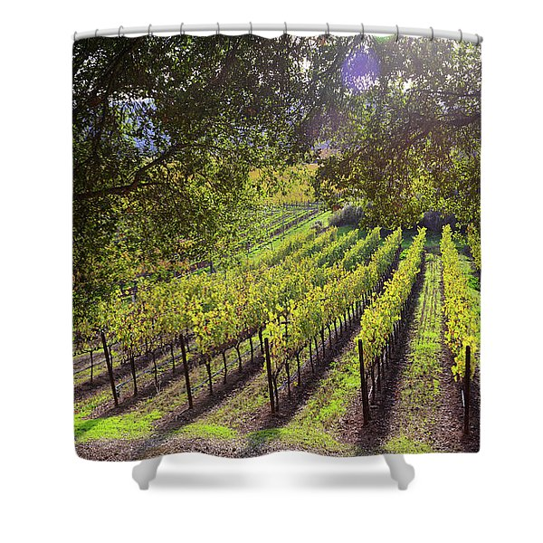 Grapevines In The Fall Shower Curtain