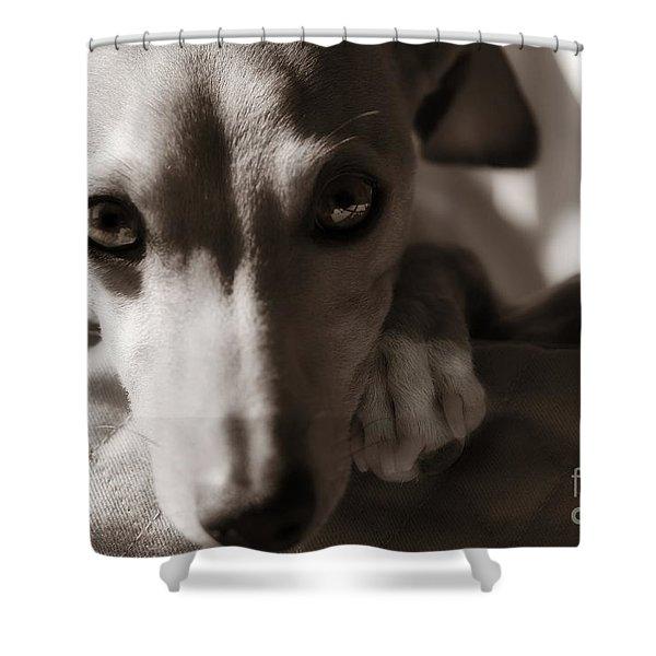 Heart You Italian Greyhound Shower Curtain