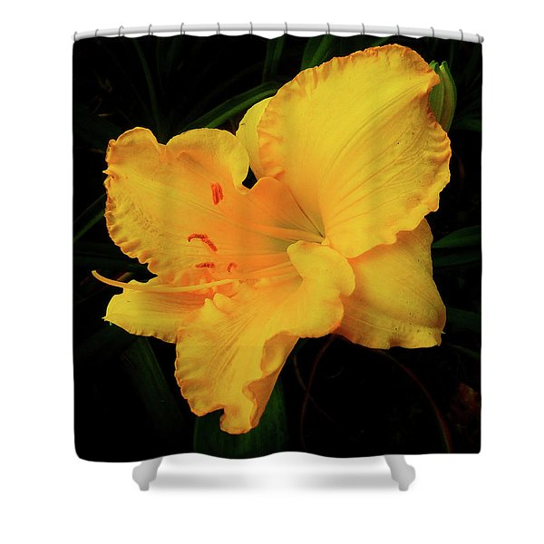 Isolation Shower Curtain