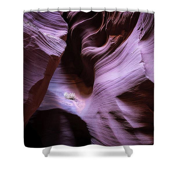 Just The Light Shower Curtain