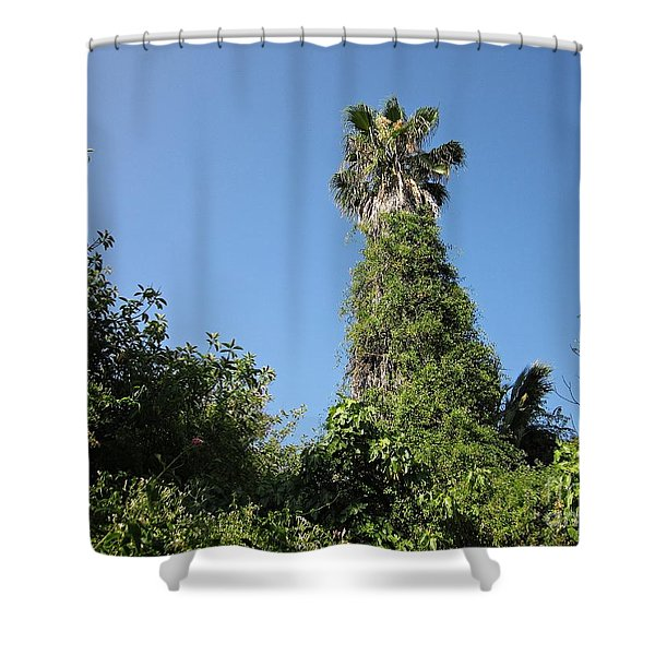 Palm Tree And Wilderness In Torremolinos Shower Curtain