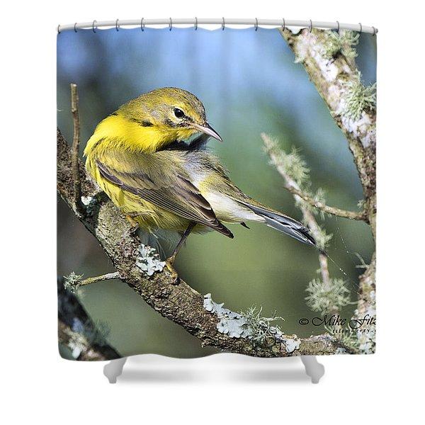 Prairie Warbler Shower Curtain