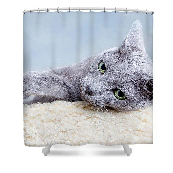 Russian Blue Cat Shower Curtain